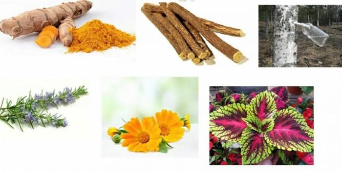 gyors zsírégető gyógynövények nyáron mindig fogyjon