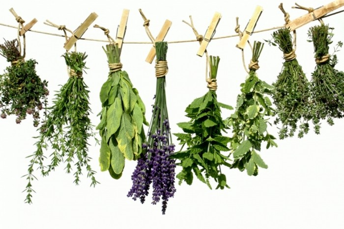 ízületi gyulladásokhoz használt gyógynövények)
